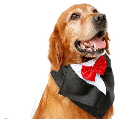 Hundesolbriller: Solbriller til hund I Love Dogs.no