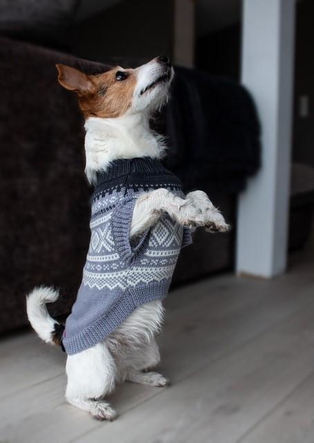 Pet Hund Puppy Tøj Jakke Tøj til Varm Vinter Pet Hunde Tøj
