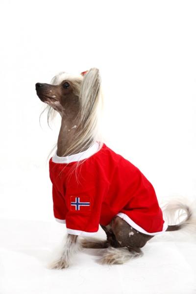 kul i skjeden norsk volafile