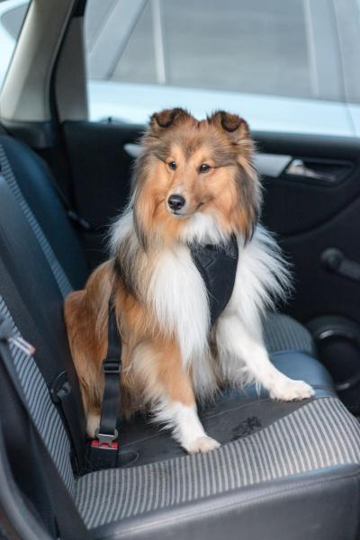 Nykomna Sikkerhetssele til hund: Sikkerhet med hund i bilbelte - I Love UB-37