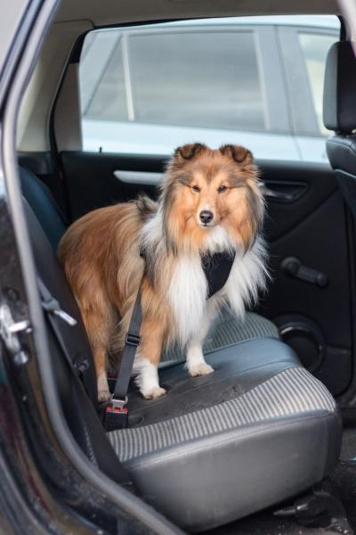 Nykomna Sikkerhetssele til hund: Sikkerhet med hund i bilbelte - I Love GZ-76
