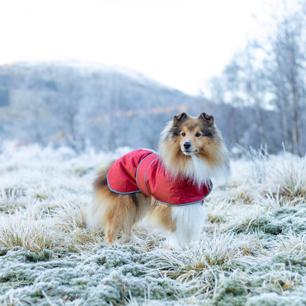 Jakke til hund: Rødt varmedekken med refleks I Love Dogs.no