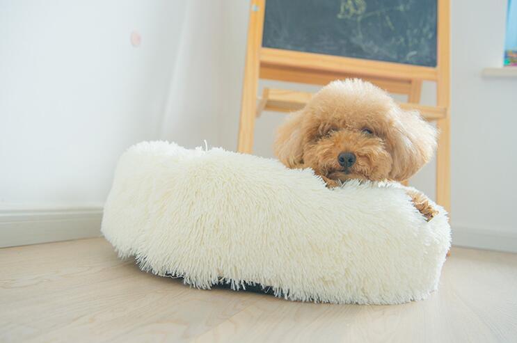 Hundeseng: Hvit rund luksus hundeseng - I Love Dogs.no