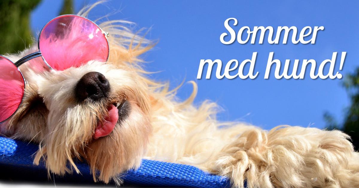 10% på alle sommerprodukter fra I Love Dogs med rabattkode.